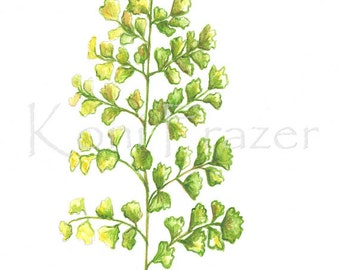 Fern watercolor painting, fern art, maidenhair fern original watercolor painting, 9x12