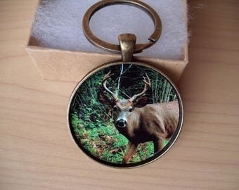 Maine Buck Deer Photo Key Chain, Original photo, Dad Gift, Hunter Gift, Nature Lover, Gift for Him
