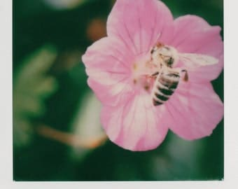 Instant Photo Bee on Flower Macro Photography - Decorate with a vintage feel - Free Domestic Shipping