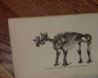 1890 Walks & Talks in the GEOLOGICAL Field by Alexander Winchell - Dinosaurs