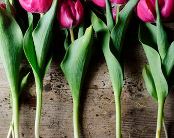 tulip art print, pink flower photo, spring decor, rustic floral art, farmhouse decor, floral nursery decor, country decor, pink tulip