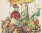"M. Andreev ""Mushrooms"" Postcard -- 1959. Condition 7/10"