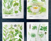 Vintage WALL ART SET of 4 Green Botanical Plant prints