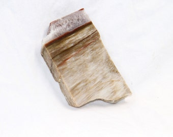 Petrified Wood Slab Pendant Stone - Vintage Rock Collection - Crafting - Jewelry Making