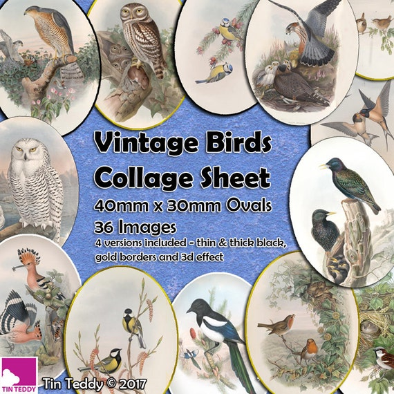 Tin Teddy Vintage Birds Ovals