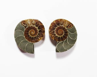 1 Pair of Split Matching Ammonite Fossil Crystal Shell Gemstones, Rock Gem, Ammonite Fossil, Polished Ammonite Mineral Specimen, Gem Fossil