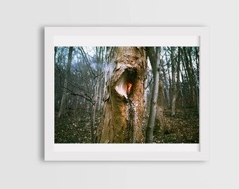 photos of trees, tree photography, surreal photography, fine art photography, fire photography, canvas photo prints, wall art decor