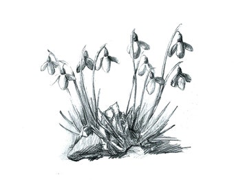SALE - Postcard Snowdrops, Illustrated Postcard, Pencil