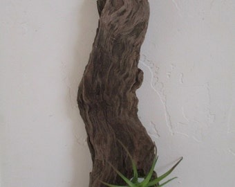 "FREE SHIPPING = Driftwood Air Plant Wall Holder ""Nautical Style"""
