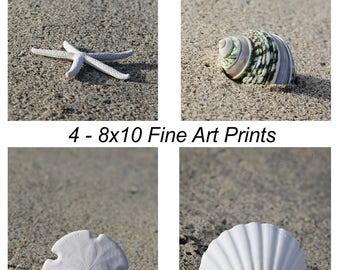 Seashell Photography Print Set