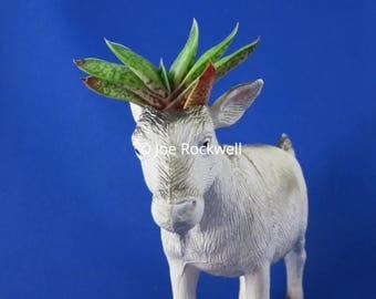 GOAT handmade upcycled gasteria succulent animal planter living art