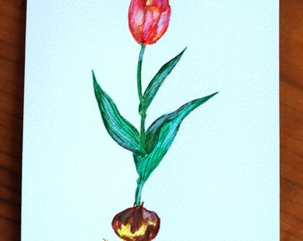 Tulip - Original Watercolour