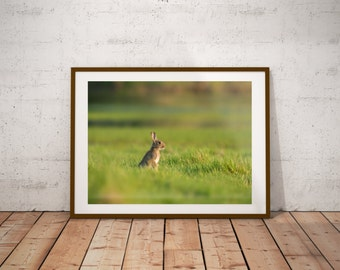 The Curious Rabbit Print