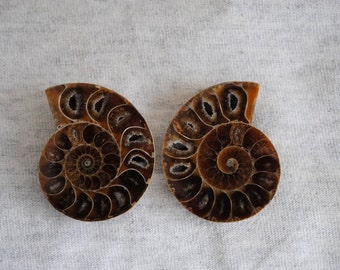 1 Pair of Matching Ammonite Fossil Crystal Shells,  Ammonite Fossil, Polished Ammonite
