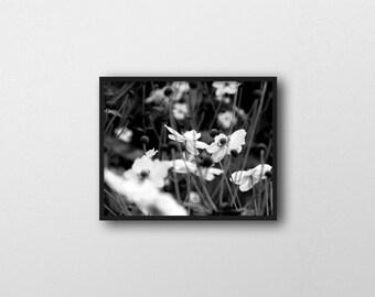 GARDENS NO. 4 | Black and white botanical photo print | modern floral home decor | flower photography | nature wall art | botanical photo