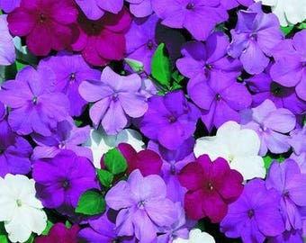 1,000 Bulk Impatiens seeds Impatiens Cascade Beauty Blues Mix