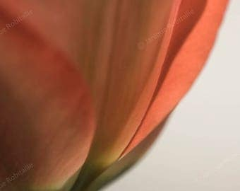 Fine art photography flower tulip artistic photograph macro close-up wall art home decor decoration macrophotography orange red