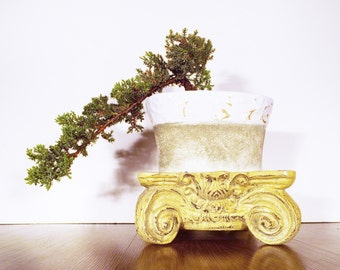 A Cascade style Juniper bonsai in a cream and stone colored pot. The bonsai is being trained to grow lower then the pot it is in!