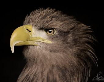 Eagle canvas, nature photography, bird canvas, fine art photography, oversized art, black canvas art, hawk, bird of prey, animal, Americana