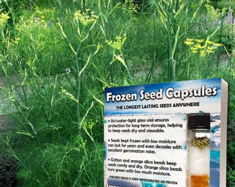 Sweet Fennel Seeds (Foeniculum vulgare dulce) 20+ Rare Seeds in Frozen Seed Capsules plus FREE 6 Variety Seed Pack!