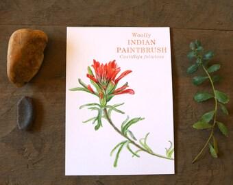 Indian Paintbrush: California Wildflower Watercolor 5 x 7 Print