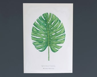 Cheese Plant Leaf Monstera Botanical Illustration A4 Digital Print