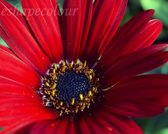 Big red flower - Nature photography print