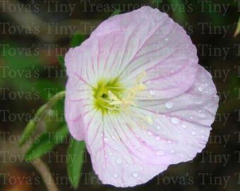 Nature Photography Flower Pink Digital Download Macro Printable