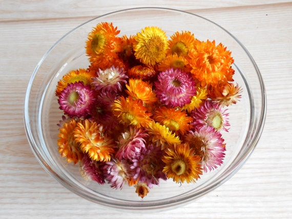 Dried straw flowers mixed size and colors small dried for Dried flowers craft supplies