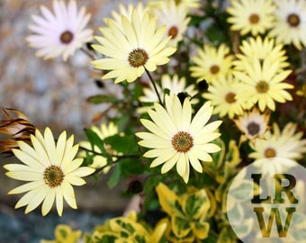 Fine Art Photography Yellow Flowers Digital Download
