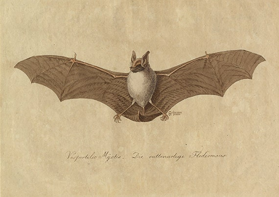 Image result for museum print of a bat