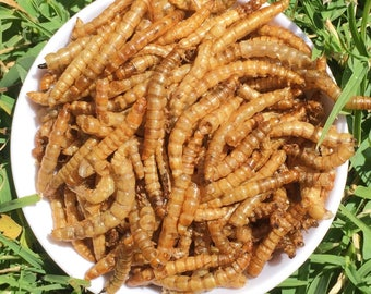 Meal worms* rich in protein *