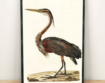 Purple heron bird print art drawing poster