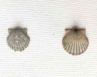 Tiny Scallop Shell Earrings - Sea Shell Earrings