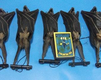 Taxidermy real fruitbat hanging Cave nectar bat lots 5 pcs