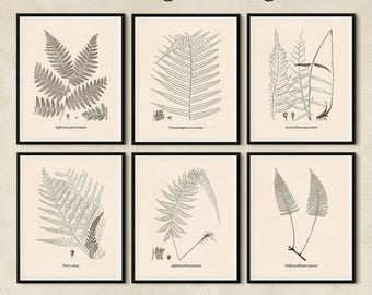 Livingroom prints, Digital print set, Fern print set, Wall art, Antique print set, Art prints set, Botanical print set, Set of 6 prints, JPG