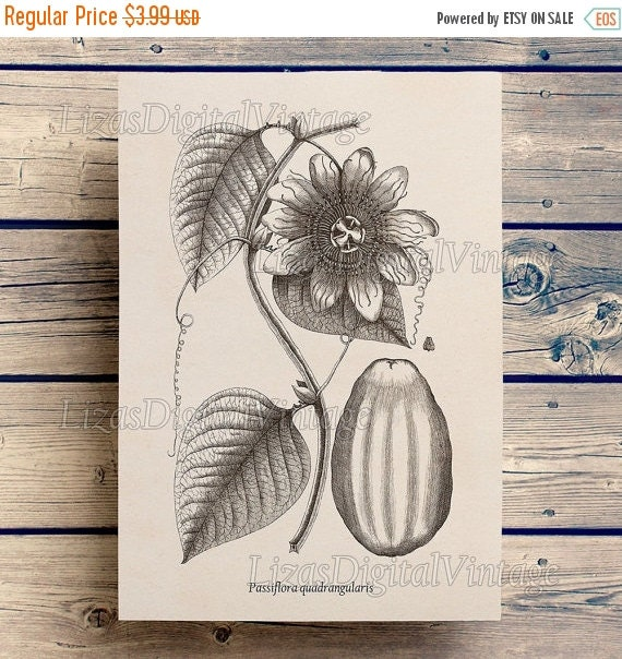50% OFF Wall art decor, Passion flower, Wall art prints, Passiflora, Vintage botanical art, Download, 8x10 printable,  11x14 printable, A3,