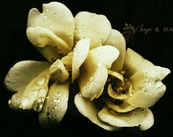 Floral photography, flower print, yellow rose, rain drops, nature photography, shabby-chic, cottage, dreamy, romantic, floral, moody floral