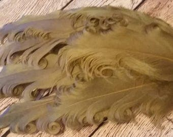 Brown Nagorie Pads - Curly Feather Pads - Feather Pads - Headband - Goose Feathers - Fascinators - Hair Piece - Hat - Embellishment