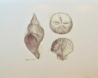 Seashells Drawing Print