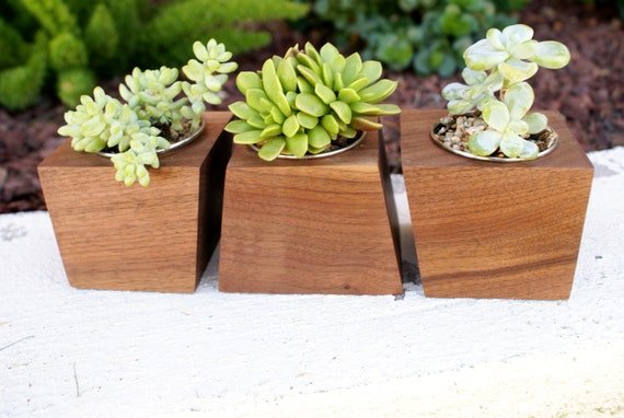 Modern Walnut Wood Boxcar Succulent Planters