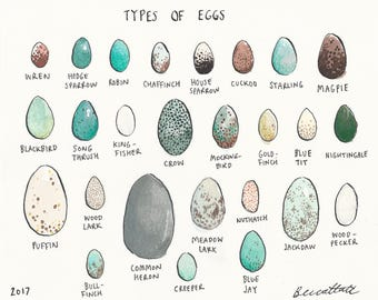 Original illustration - Eggs