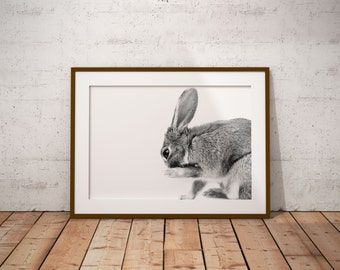 Rabbit black and white photography, photography black and white rabbit, printable animal art photography, digital download print photography