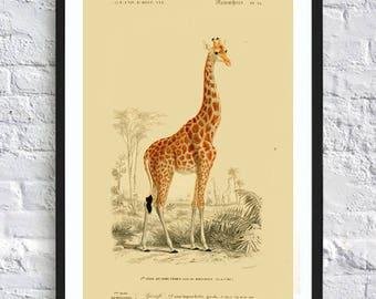 Giraffe print wall art print vintage illustrations poster rustic cabin wall art print gift idea