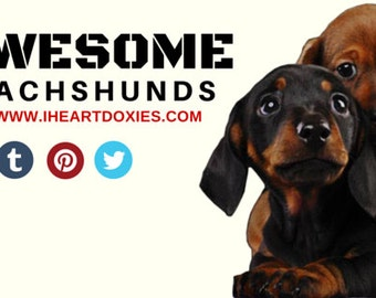 Awesome Dachshunds