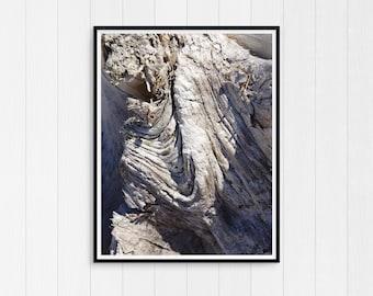 Beach Print Driftwood, Cottage Decor, Coastal Beach Decor, Nautical Wall Art Print, Printable Photo, Digital Download, Modern Minimal