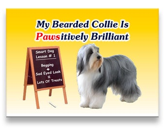 Bearded Collie Pawsitively Brilliant Fridge Magnet
