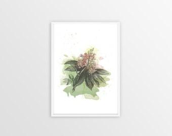 A3, Chestnut, Wall art, Decoration, Home decor, Print, Mural Art, botanical, watercolor