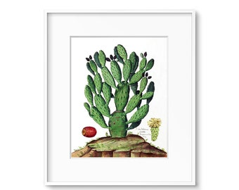Botanical Print, Cactus Print, Botanical Illustration, Cactus Painting, Printable Art, Cactus Art, Vintage Botanical Prints, Southwestern
