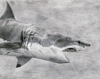 Shark pencil drawing, A4 print